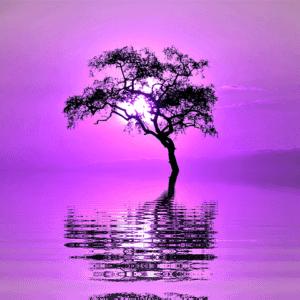 Pure Relaxation Zen Sleep Music