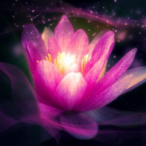 Sacred Lotus Zen Chillout Music